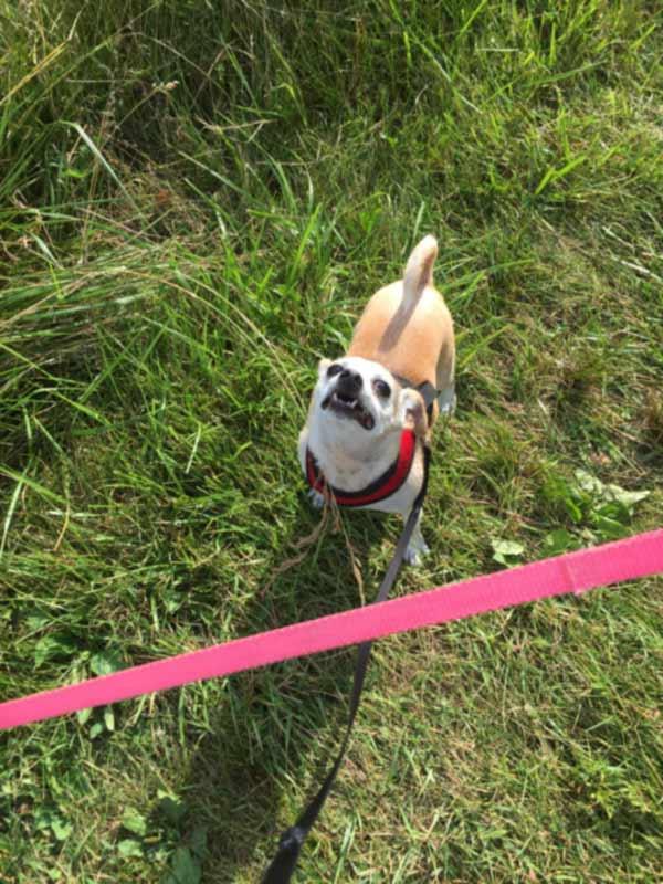 A fun dog walk