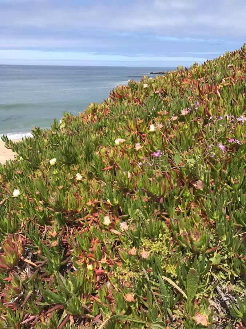 Wild Flowers, Half Moon Bay, CA